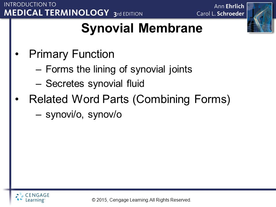 Synovial Membrane Primary Function