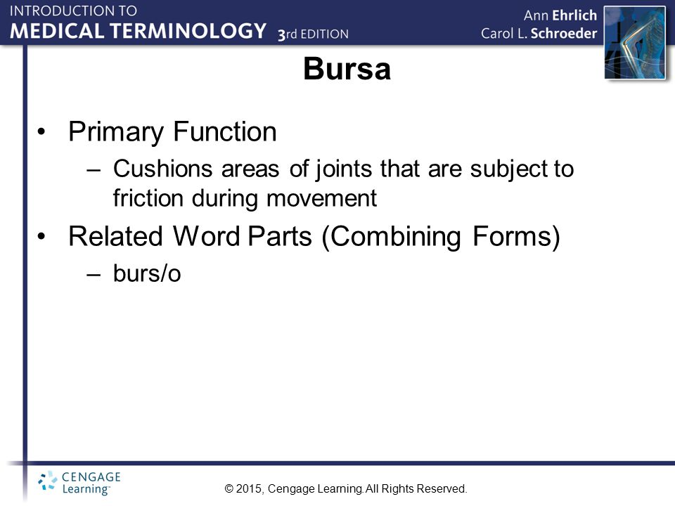 Bursa Primary Function Related Word Parts (Combining Forms)