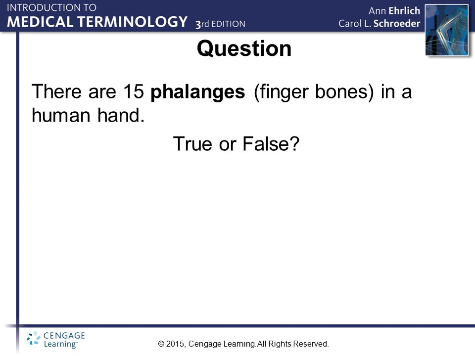 Question There are 15 phalanges (finger bones) in a human hand.