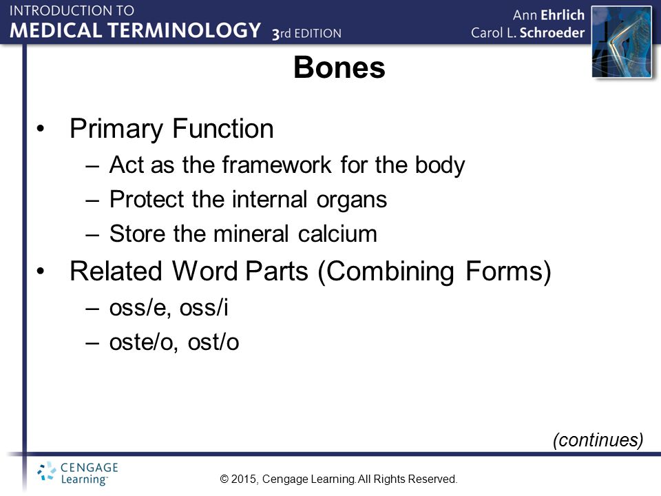 Bones Primary Function Related Word Parts (Combining Forms)