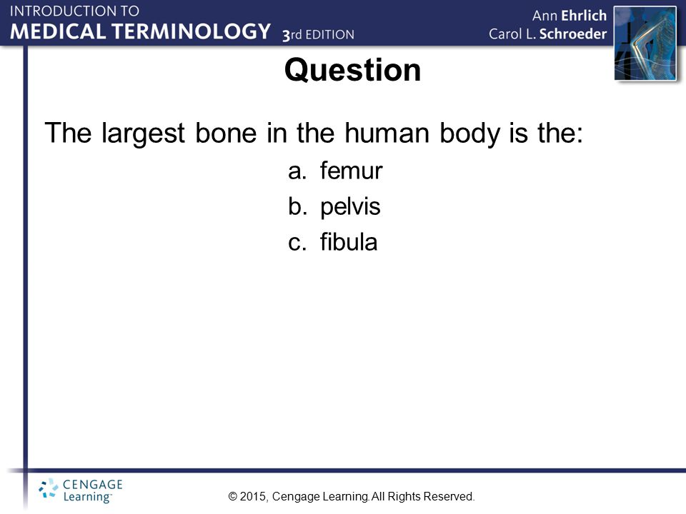 Question The largest bone in the human body is the: femur pelvis