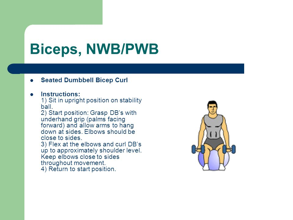 Biceps, NWB/PWB Seated Dumbbell Bicep Curl