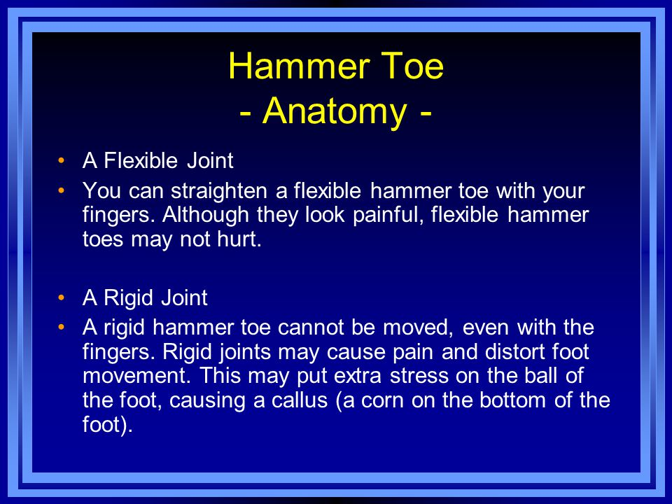 Hammer Toe - Anatomy - A Flexible Joint