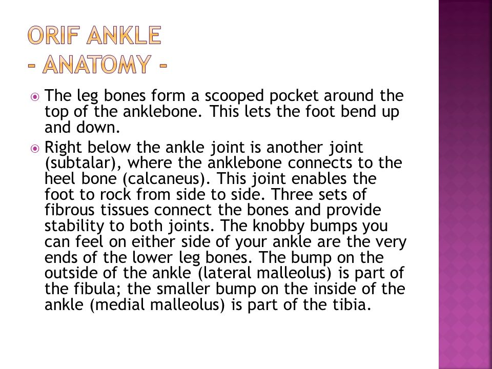 ORIF Ankle - Anatomy - The leg bones form a scooped pocket around the top of the anklebone. This lets the foot bend up and down.