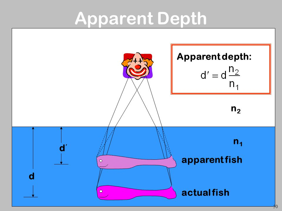 Apparent Depth d d Apparent depth: n2 n1 apparent fish actual fish 50