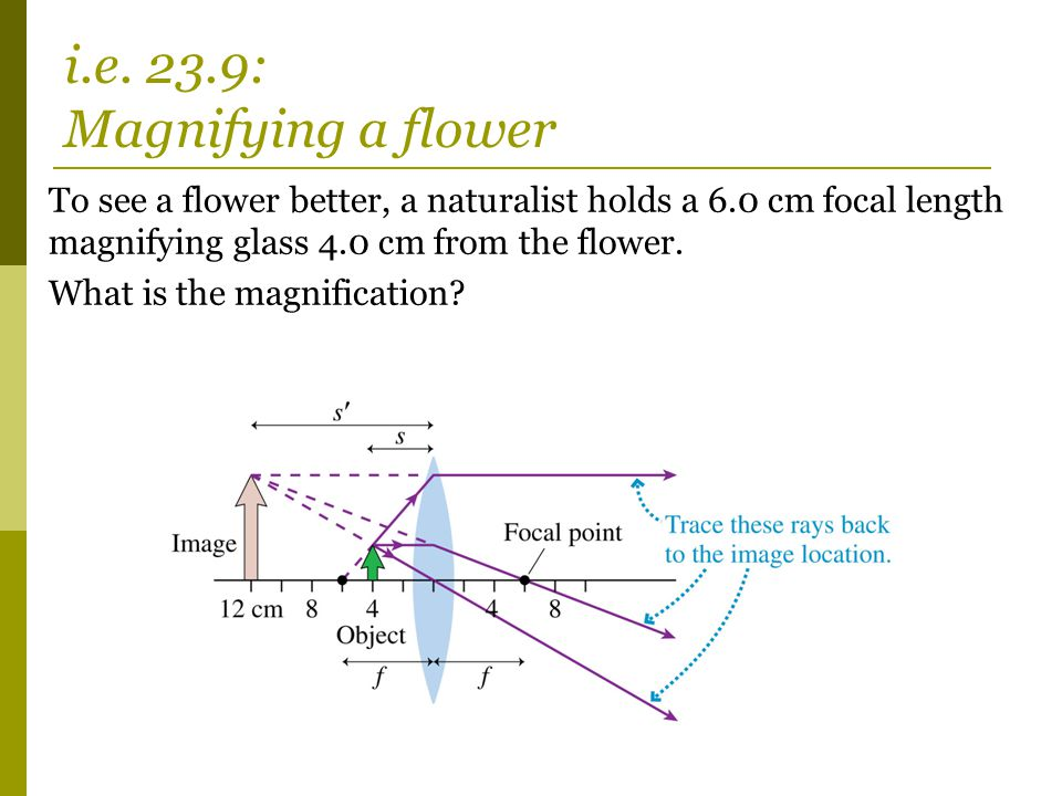 i.e. 23.9: Magnifying a flower
