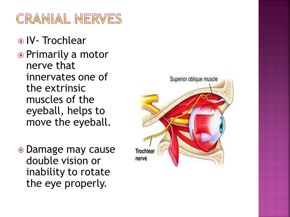 Cranial nerves IV- Trochlear