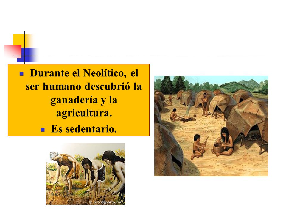 Durante el Neolítico, el ser humano descubrió la ganadería y la agricultura.