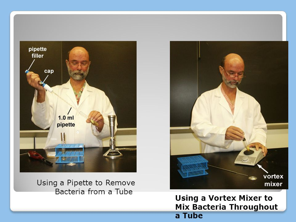 Using a Pipette to Remove Bacteria from a Tube