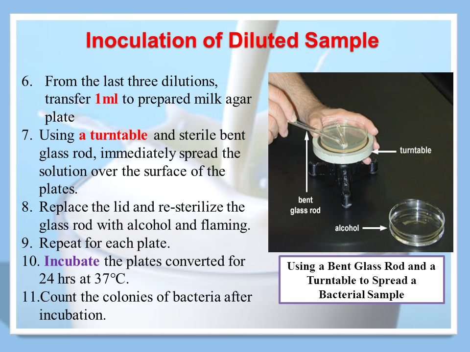 Inoculation of Diluted Sample