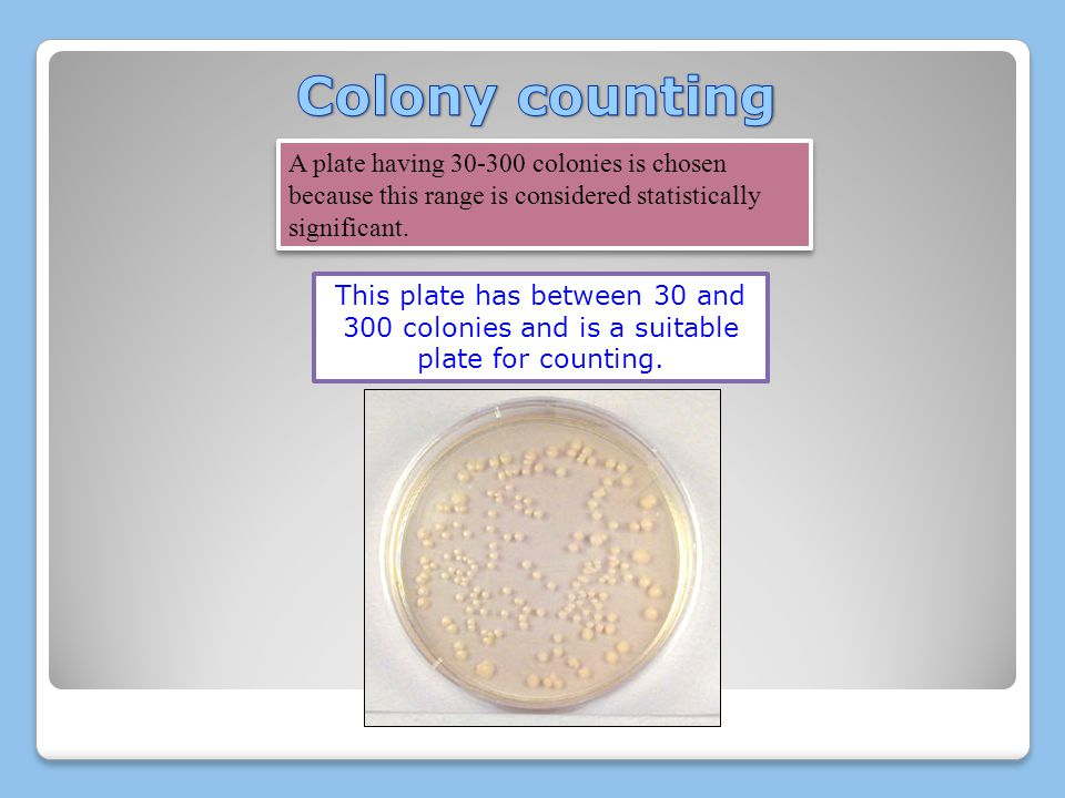 Colony counting A plate having 30-300 colonies is chosen because this range is considered statistically significant.