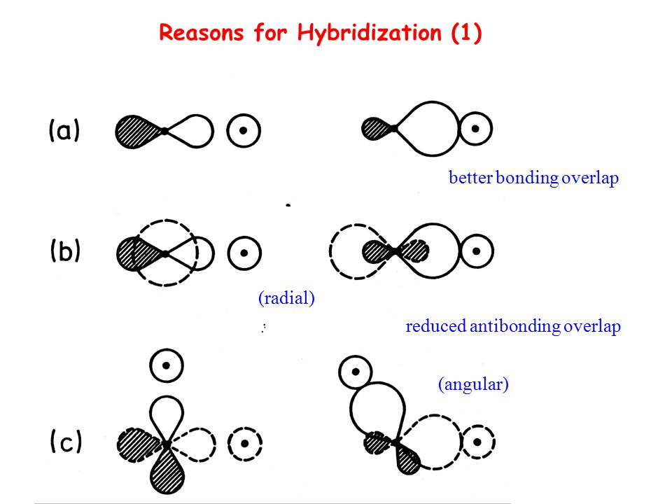 Reasons for Hybridization (1)