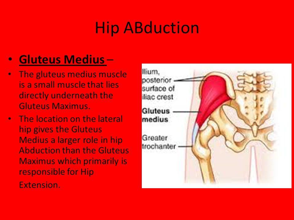Hip ABduction Gluteus Medius –