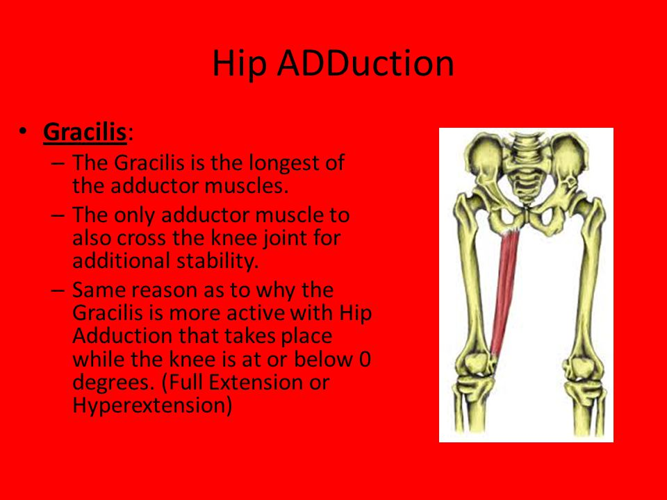 Hip ADDuction Gracilis: