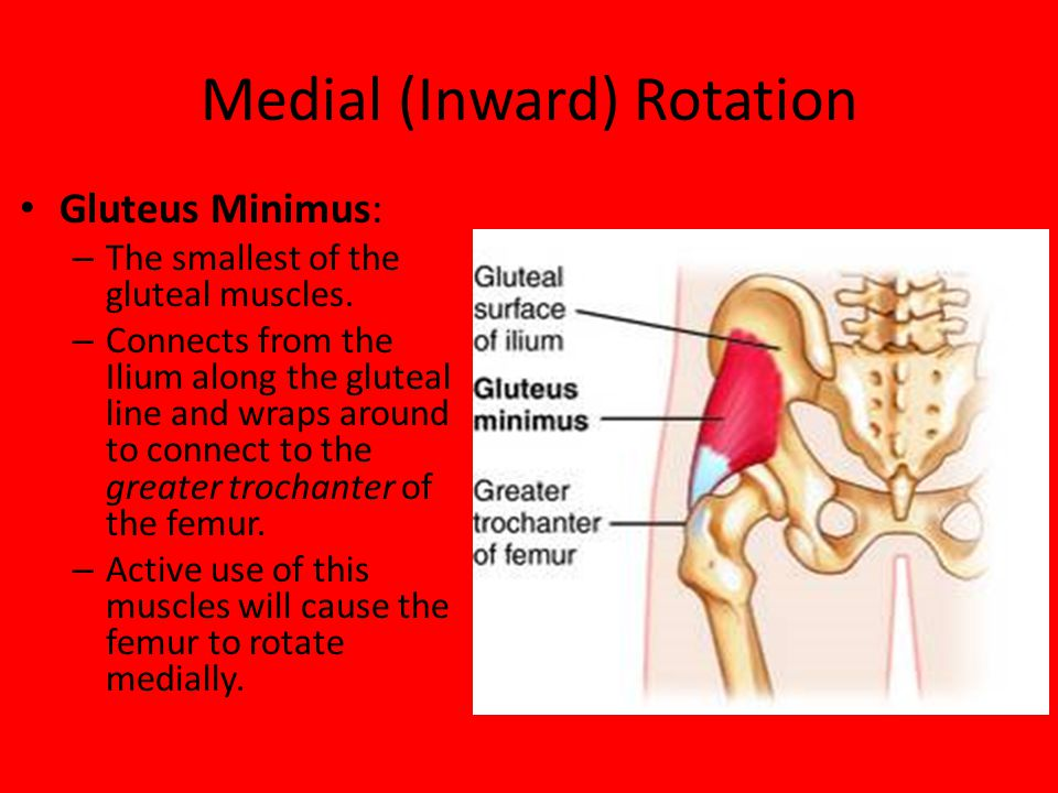 Medial (Inward) Rotation