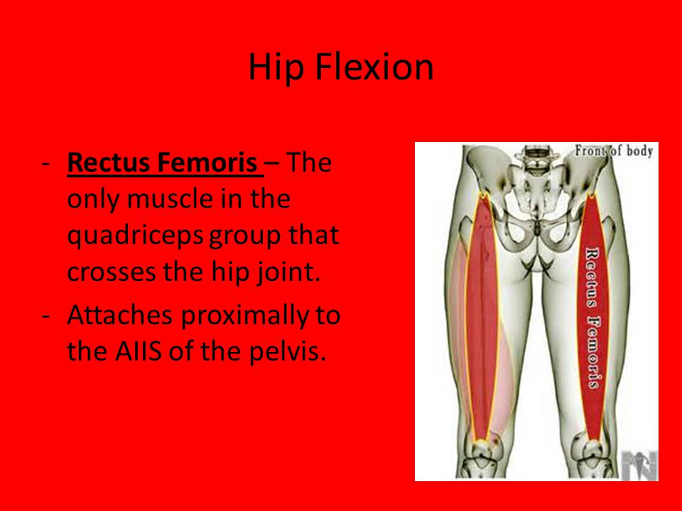 Hip Flexion Rectus Femoris – The only muscle in the quadriceps group that crosses the hip joint.