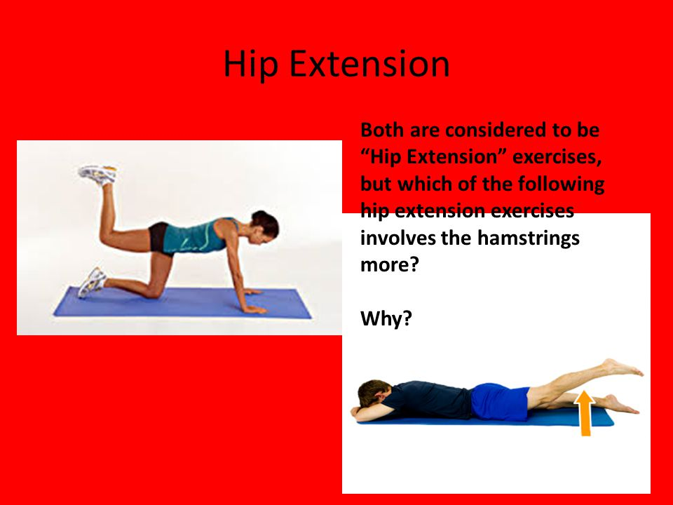 Hip Extension Both are considered to be Hip Extension exercises, but which of the following hip extension exercises involves the hamstrings more