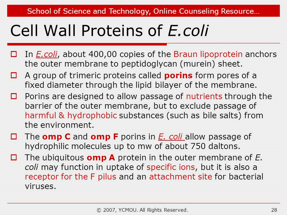 Cell Wall Proteins of E.coli