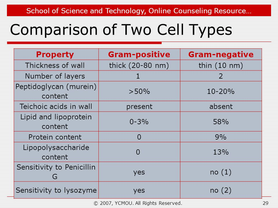 Comparison of Two Cell Types