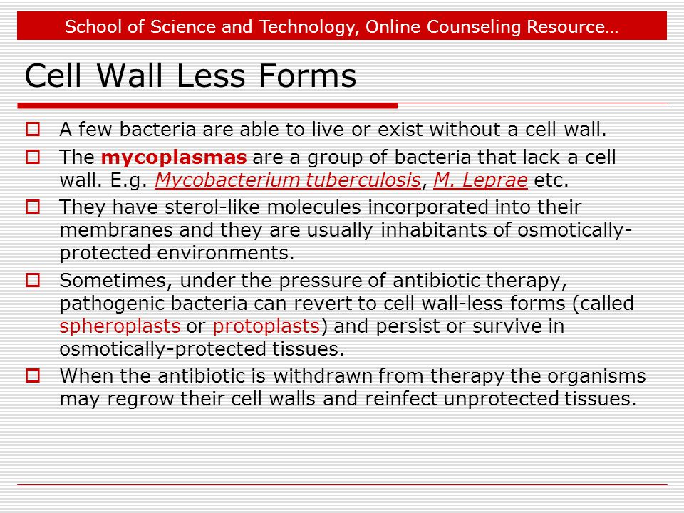 Cell Wall Less Forms A few bacteria are able to live or exist without a cell wall.
