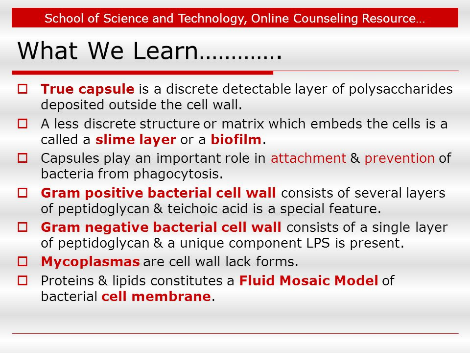 What We Learn…………. True capsule is a discrete detectable layer of polysaccharides deposited outside the cell wall.