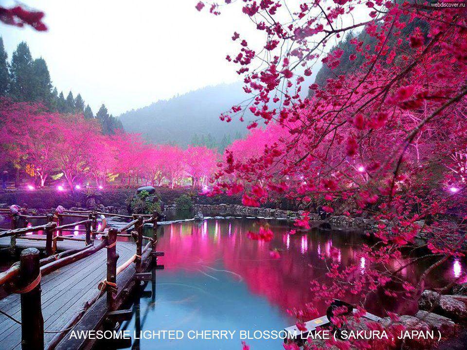 AWESOME LIGHTED CHERRY BLOSSOM LAKE ( SAKURA , JAPAN )