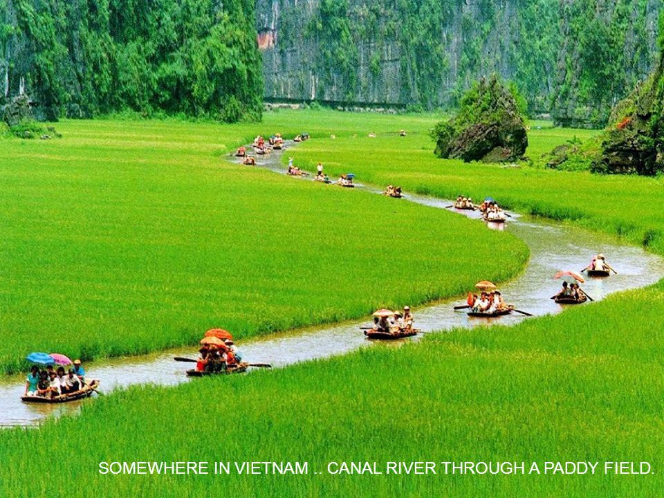 SOMEWHERE IN VIETNAM .. CANAL RIVER THROUGH A PADDY FIELD.