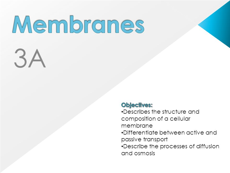 3A Membranes Objectives: