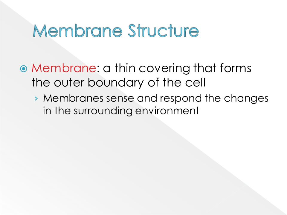 Membrane Structure Membrane: a thin covering that forms the outer boundary of the cell.