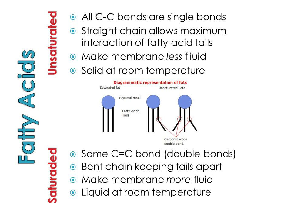 Fatty Acids Unsaturated Saturaded All C-C bonds are single bonds