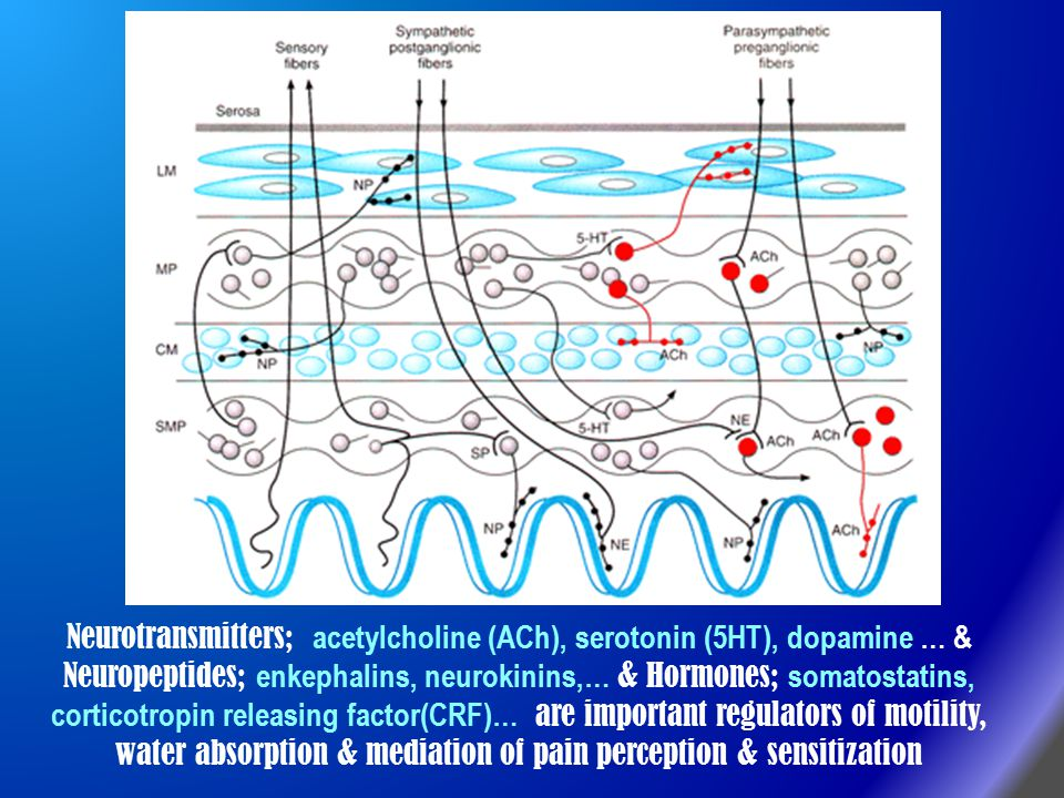 Neurotransmitters; acetylcholine (ACh), serotonin (5HT), dopamine … & Neuropeptides; enkephalins, neurokinins,… & Hormones; somatostatins, corticotropin releasing factor(CRF)… are important regulators of motility, water absorption & mediation of pain perception & sensitization