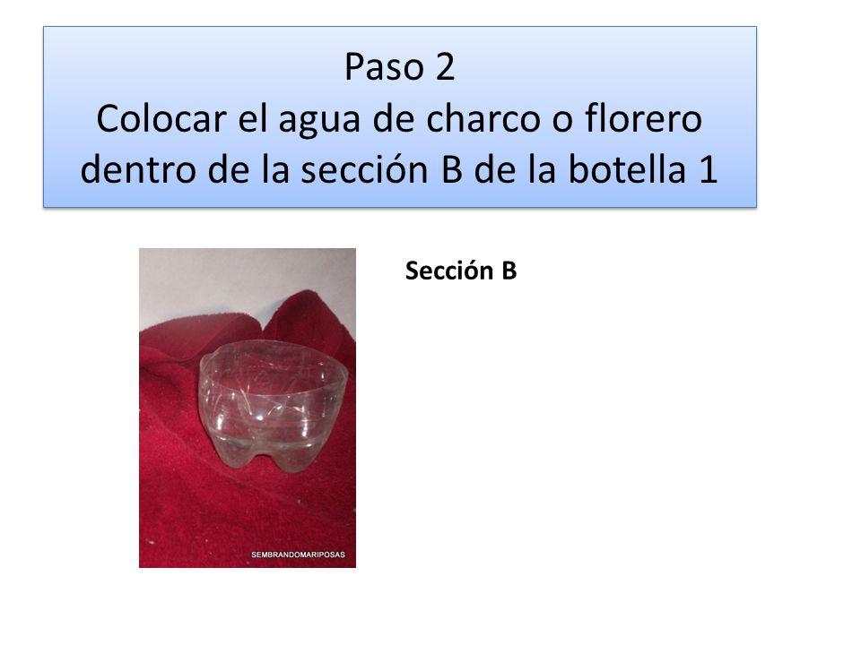 Paso 2 Colocar el agua de charco o florero dentro de la sección B de la botella 1