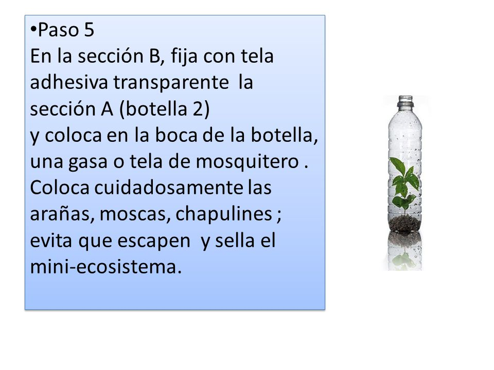 Paso 5 En la sección B, fija con tela adhesiva transparente la sección A (botella 2) y coloca en la boca de la botella, una gasa o tela de mosquitero .