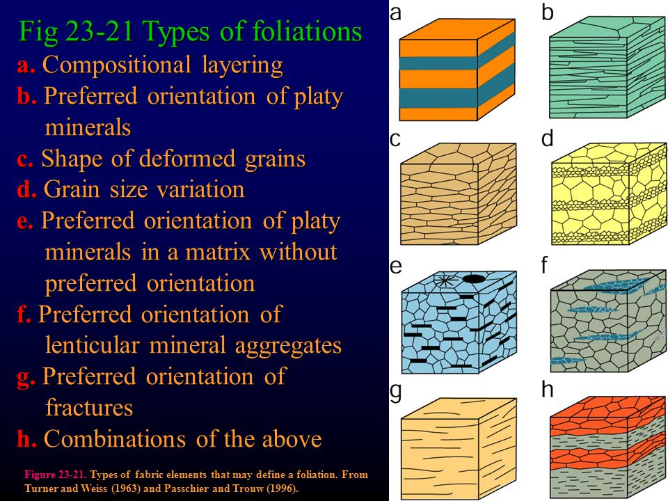 Fig 23-21 Types of foliations