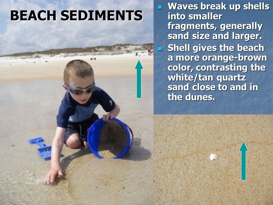 BEACH SEDIMENTS Waves break up shells into smaller fragments, generally sand size and larger.