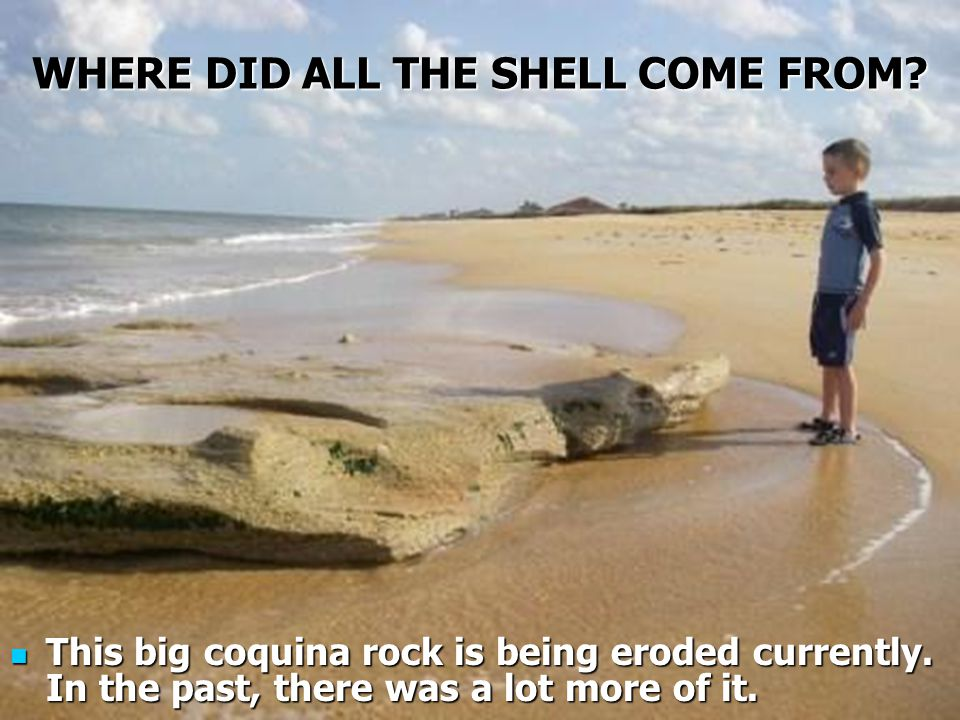 WHERE DID ALL THE SHELL COME FROM