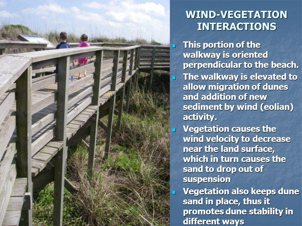WIND-VEGETATION INTERACTIONS