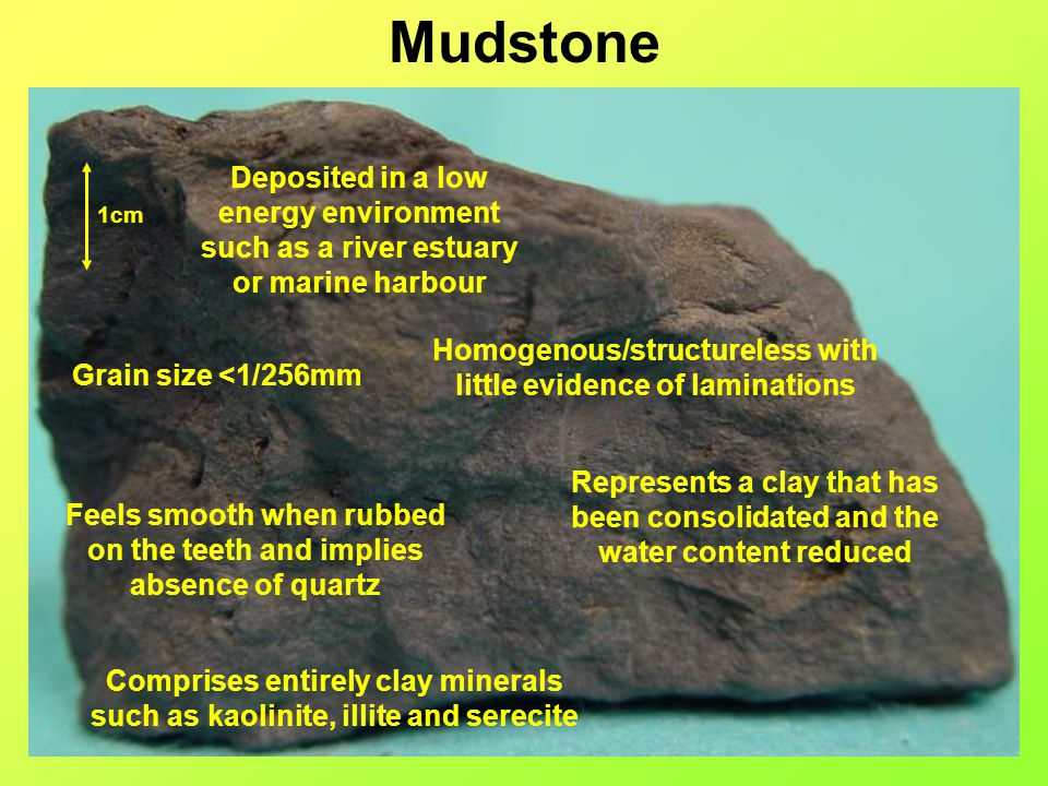 Mudstone Deposited in a low energy environment such as a river estuary or marine harbour. 1cm.