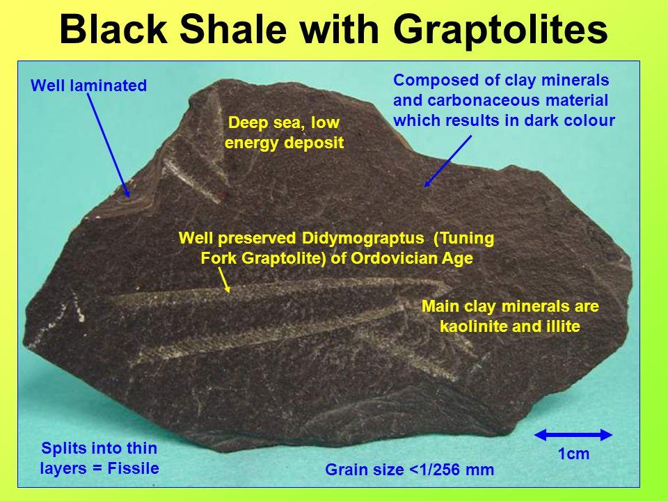 Black Shale with Graptolites