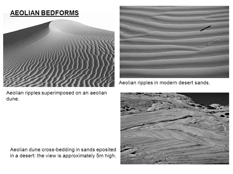AEOLIAN BEDFORMS Aeolian ripples in modern desert sands.
