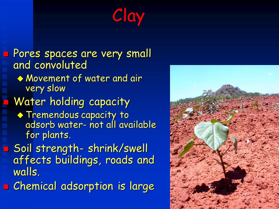 Clay Pores spaces are very small and convoluted Water holding capacity