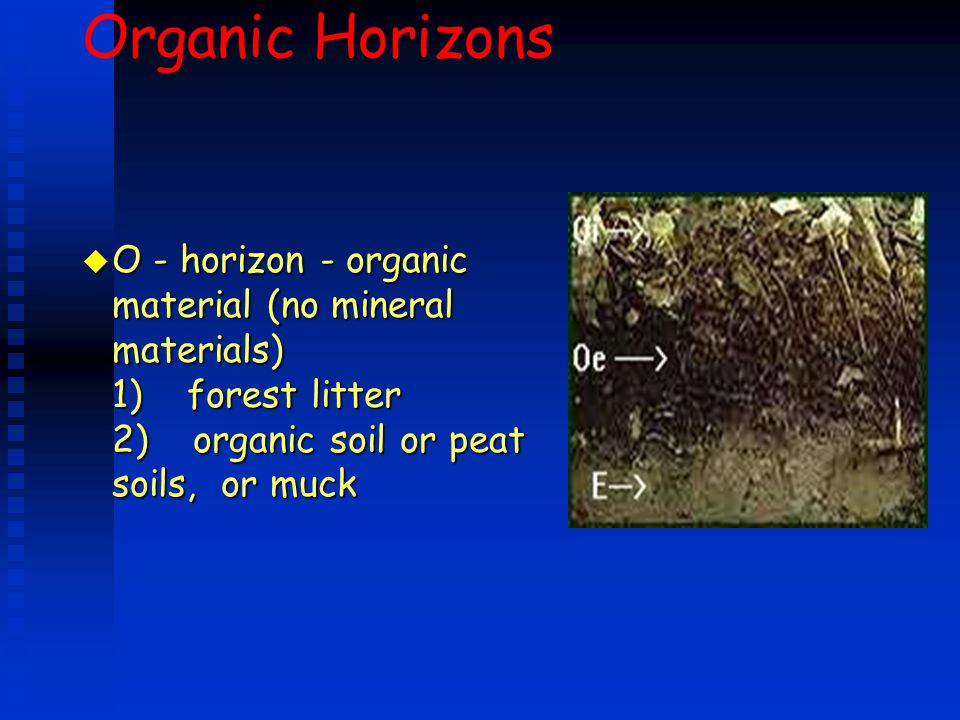 Organic Horizons