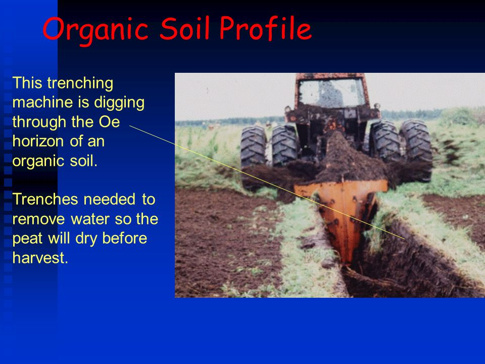 Organic Soil Profile This trenching machine is digging through the Oe