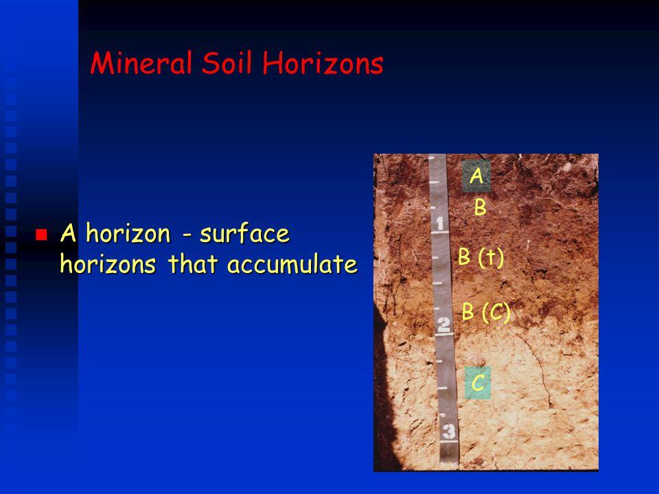 Mineral Soil Horizons A horizon - surface horizons that accumulate A B