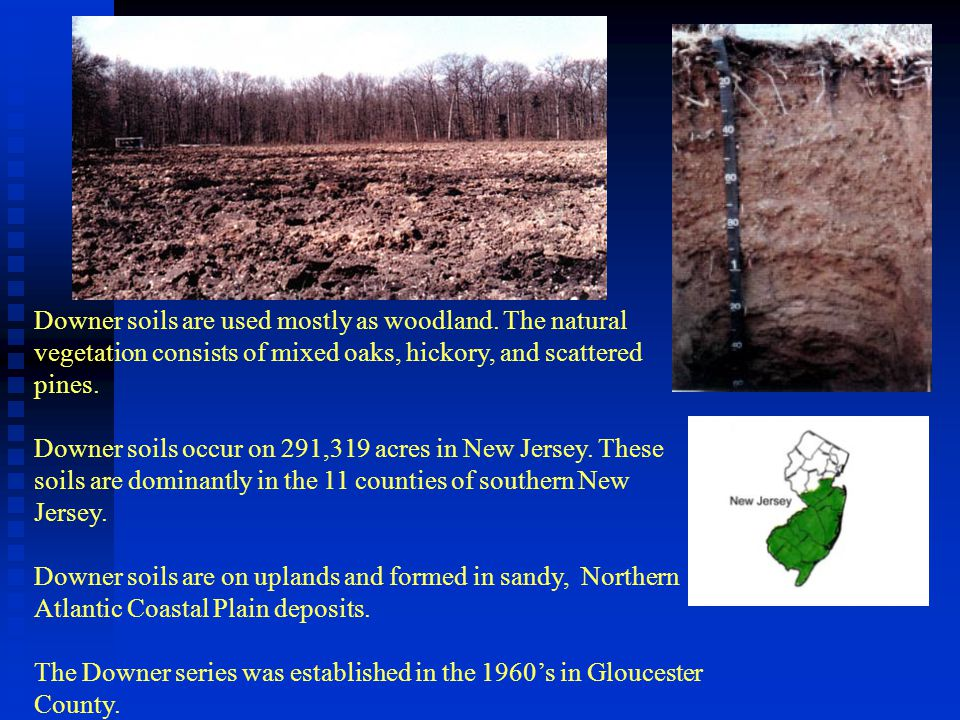 Downer soils are used mostly as woodland. The natural
