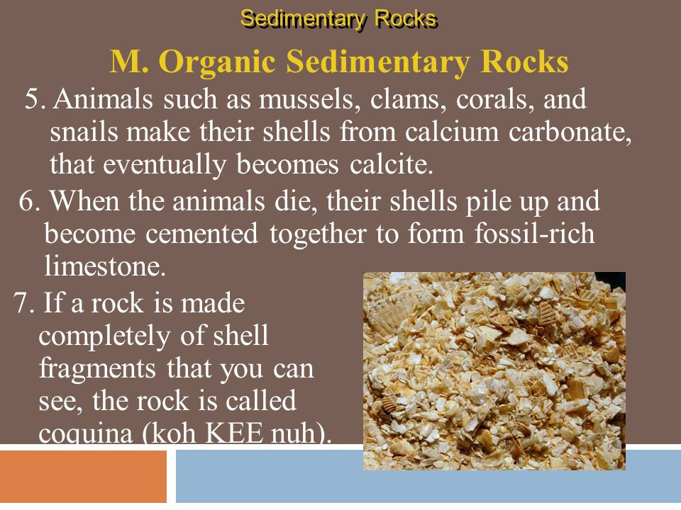 M. Organic Sedimentary Rocks
