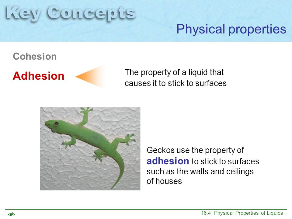 Physical properties Adhesion Cohesion