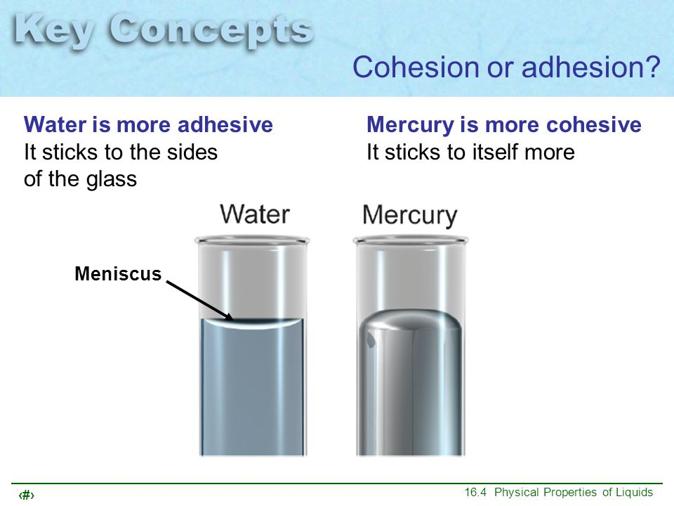 Cohesion or adhesion Water is more adhesive