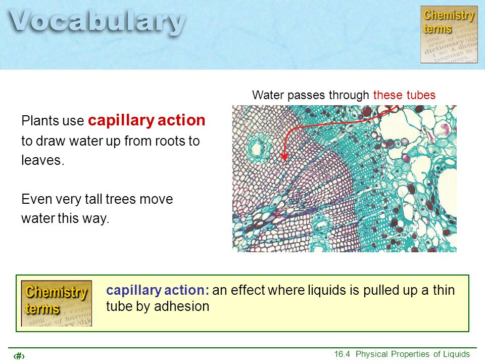 Plants use capillary action to draw water up from roots to leaves.