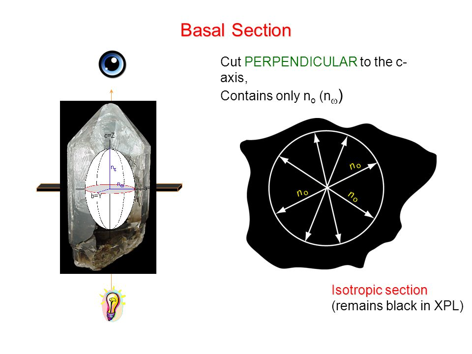 Basal Section Cut PERPENDICULAR to the c-axis, Contains only no (n)